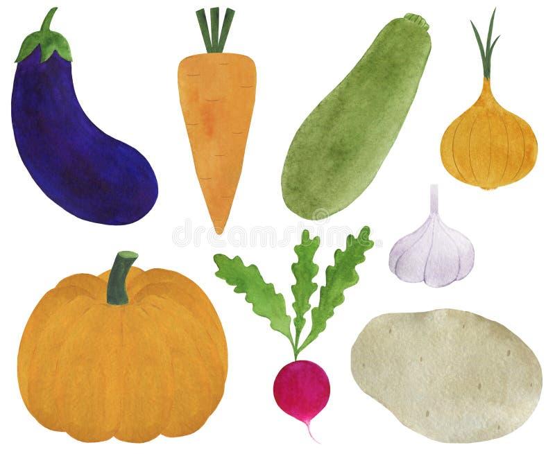 Set of fresh vegetables watercolor illustration vegetarianism ingredients cooking radish pumpkin carrot onion zucchini eggplant po. Illustration  Set of fresh royalty free illustration