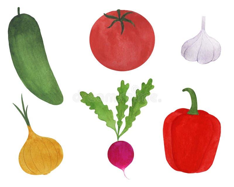 Set of fresh vegetables watercolor illustration vegetarianism ingredients cooking tomato cucumber radish onion garlic pepper royalty free illustration