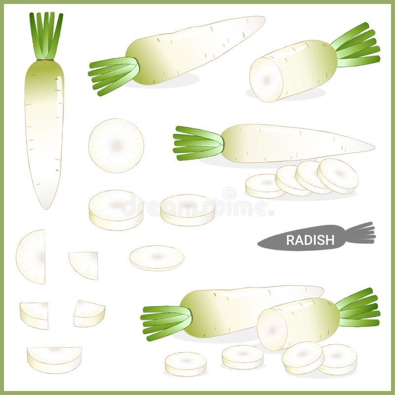 Set of fresh white radish or daikon with green top in various cuts and styles, vector illustration stock illustration