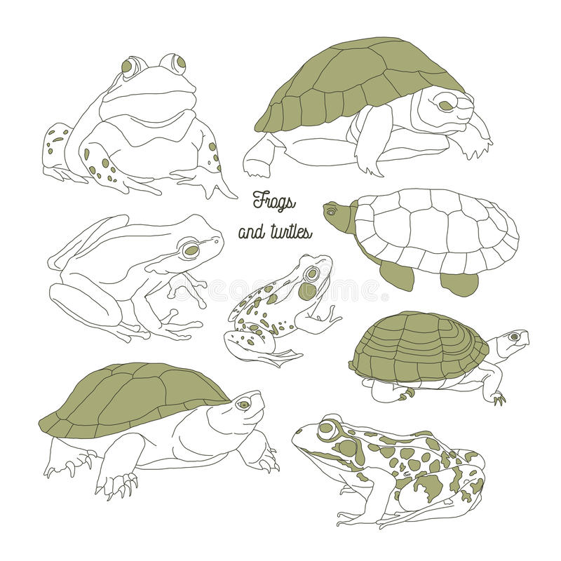 Set with frogs and turtless vector illustration