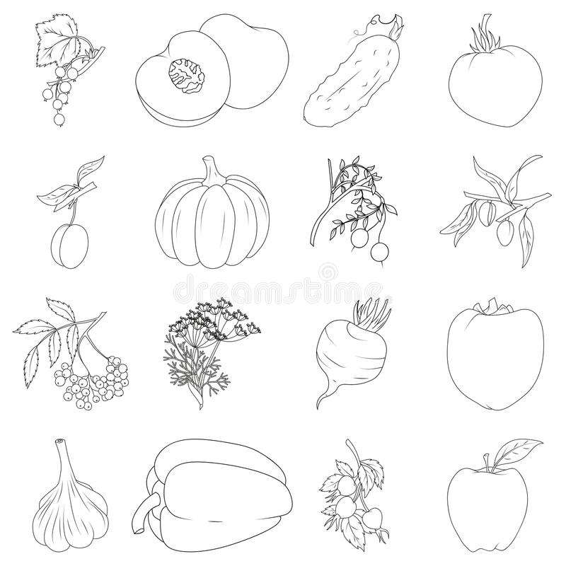 Set of fruits and vegetables. Coloring book. Set of fruits and vegetables royalty free illustration