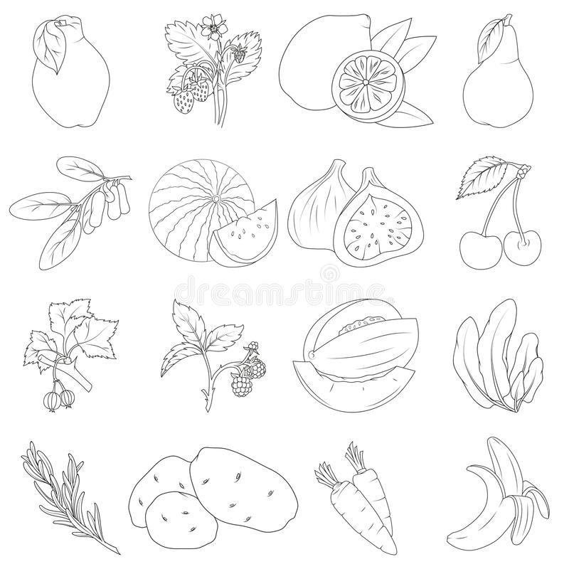 Set of fruits and vegetables. Coloring book. Set of fruits and vegetables stock illustration