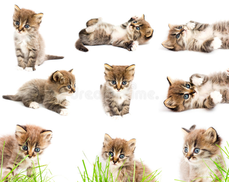 A Set Of Funny Cats Royalty Free Stock Photography