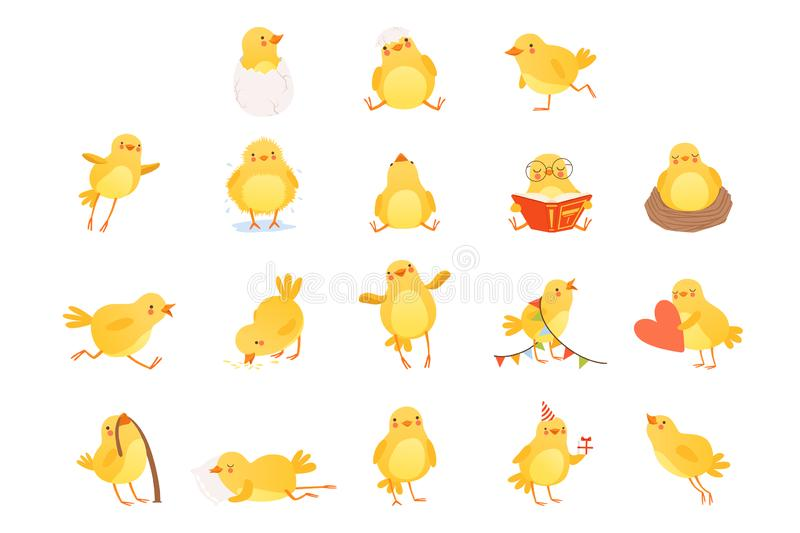 Set of funny yellow chicken in various situations. Cartoon character of little farm bird. Isolated flat vector design. Set of funny yellow chicken in various vector illustration