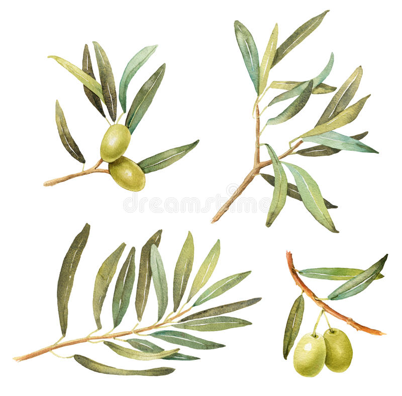 Set gałązki oliwne z liść akwareli ilustracjami royalty ilustracja