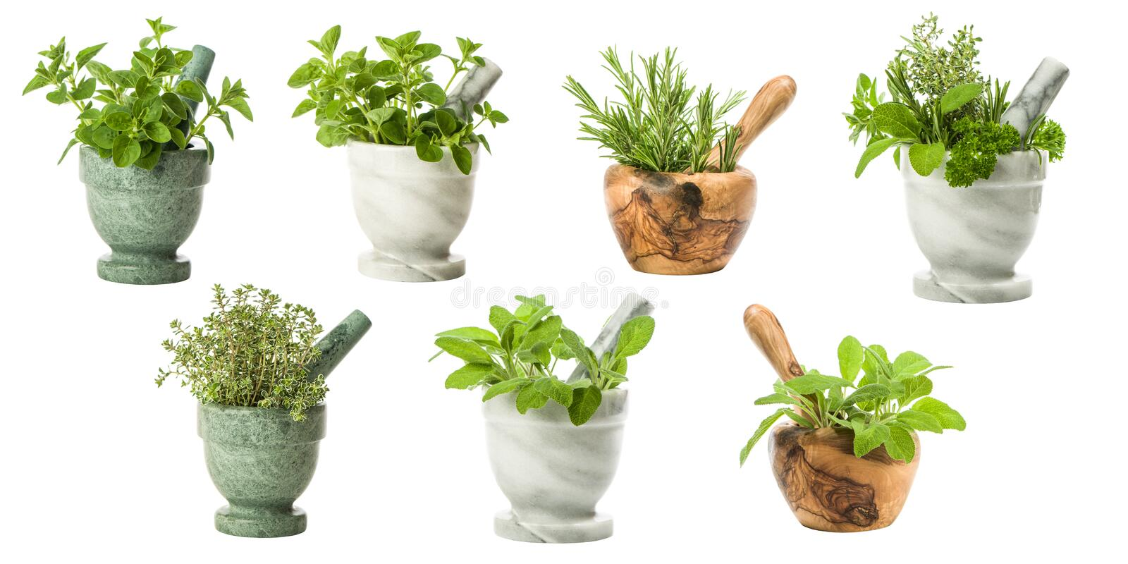 Set Of Garden Herbs royalty free stock images