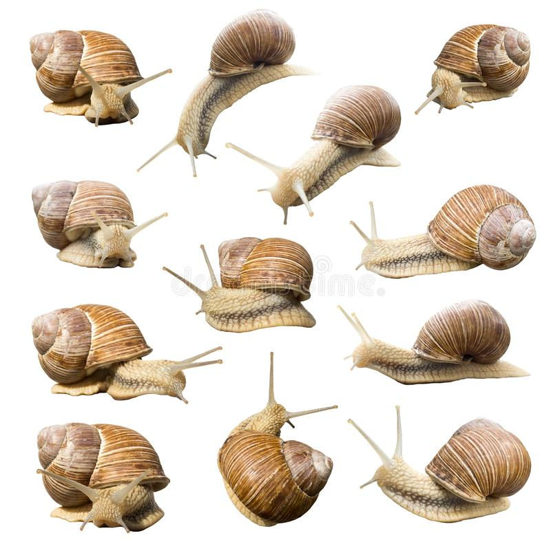 Set of garden snails. From different angles isolated on white background stock photo