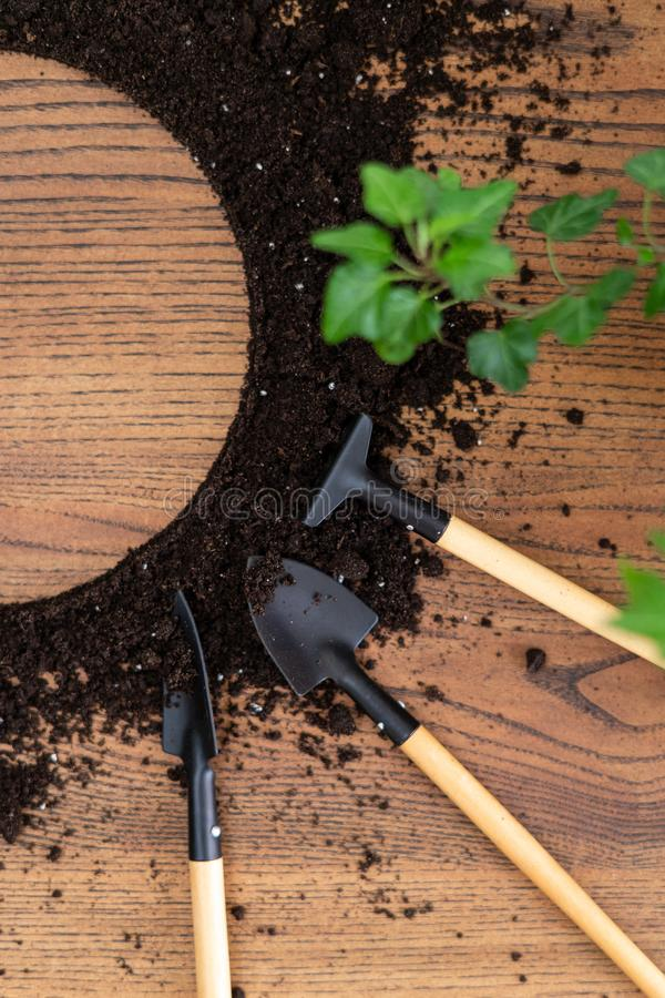 Set gardening tools with green brunch and black ground on wooden table with copy space. Flat lay view of set gardening tools with green brunch and black ground royalty free stock image