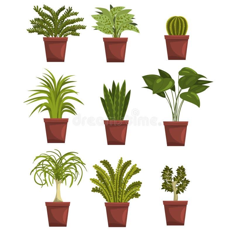 Set garnek zieleni deciduous rośliny z liśćmi Sansevieria, kaktus, pipal, bonsai, drzewko palmowe Houseplants projekt royalty ilustracja