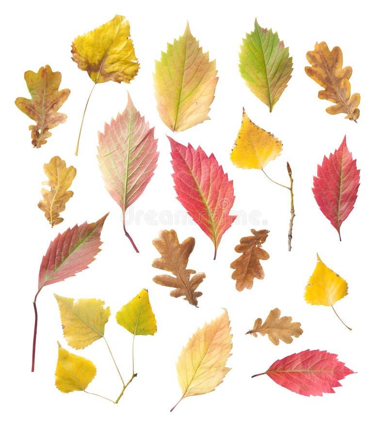 Set Gelben und Rotblätter lizenzfreies stockbild