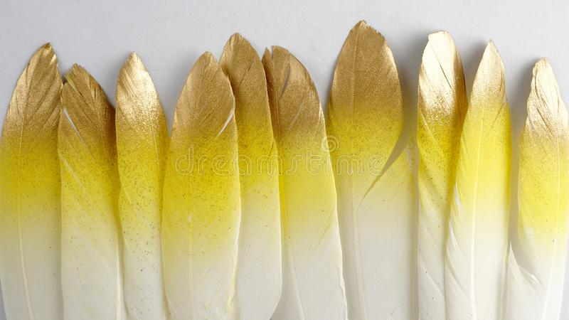 Set of gilded golden gold yellow pink feather isolated on white background stock photography