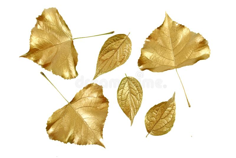Set of gold leaves. Christmas decoration. gold leaf. Set of gold leaves. Christmas decoration stock image