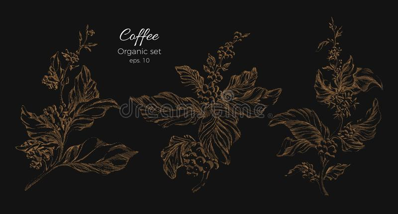 Set of golden coffee tree branches. Vector stock illustration