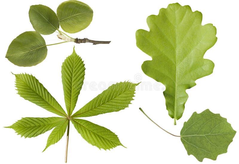 Set grüne Blätter lizenzfreies stockfoto