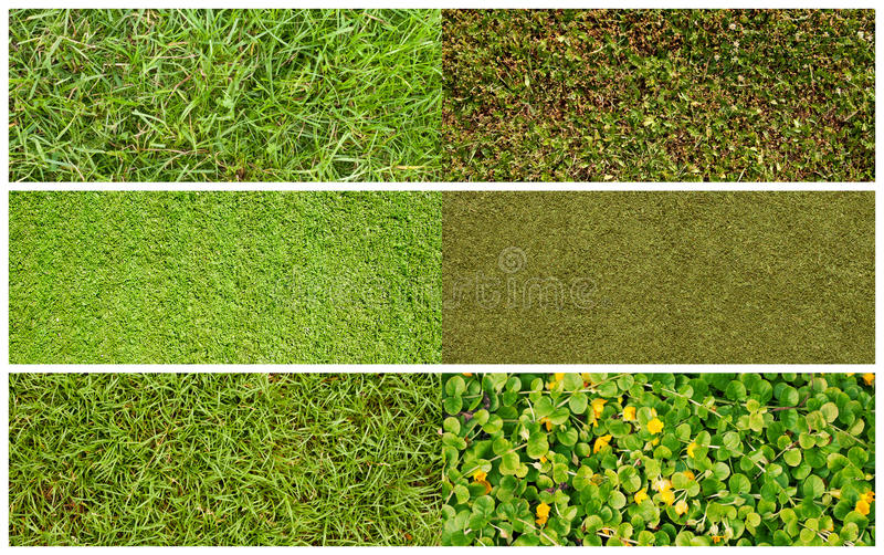 Download Set of grass stock photo. Image of cultivated, meadow - 21654528