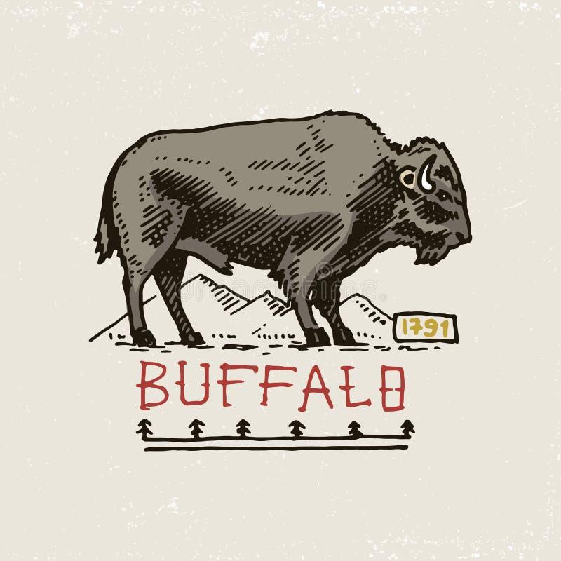 Set grawerujący rocznik, ręka, etykietki lub odznaki dla, rysująca, stara, hindusa lub rodowitego amerykanina bizon ilustracji