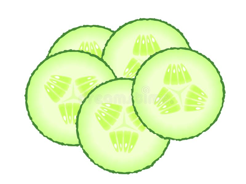 Set of green cucumber slices. Illustration of vegetables isolated on a white background. Diet healthy organic food stock illustration