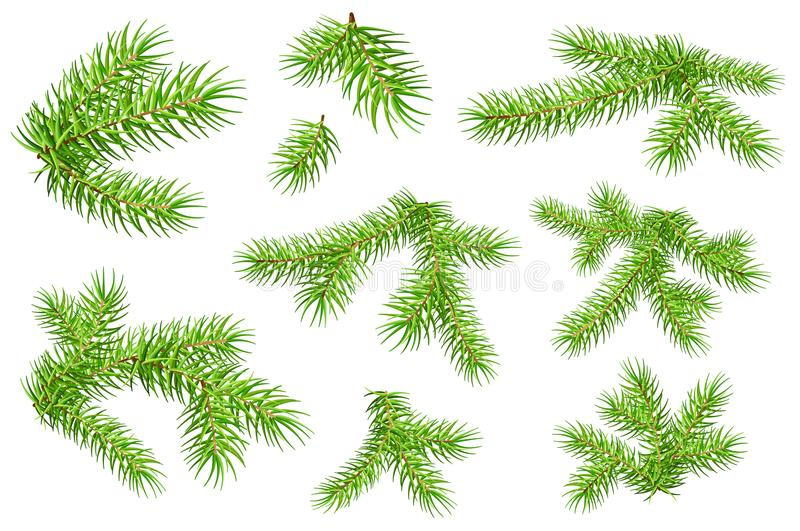 Set of green fluffy fir pine branches isolated on white background royalty free illustration
