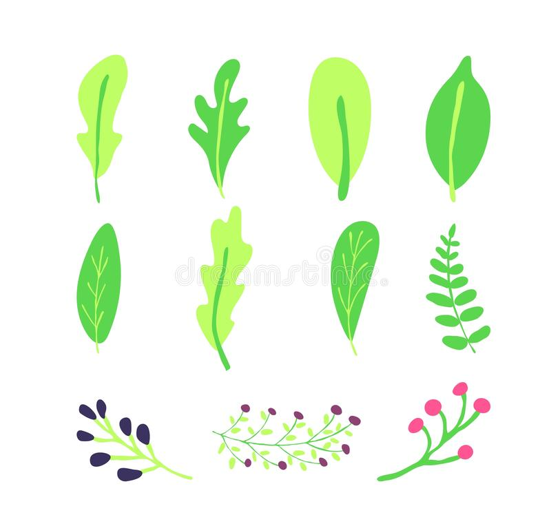 Set of green leave and branches of berries. Hand drawing vector illustration.Element for seamless pattern design advertising stock illustration