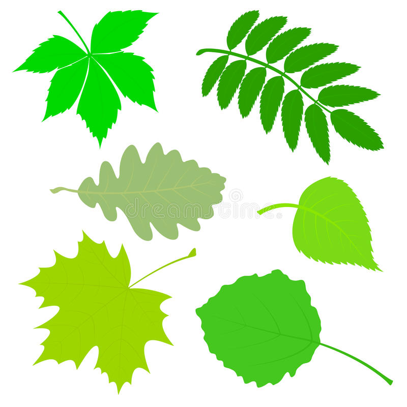 Download Set of green leaves. stock vector. Image of green, birch - 42228483