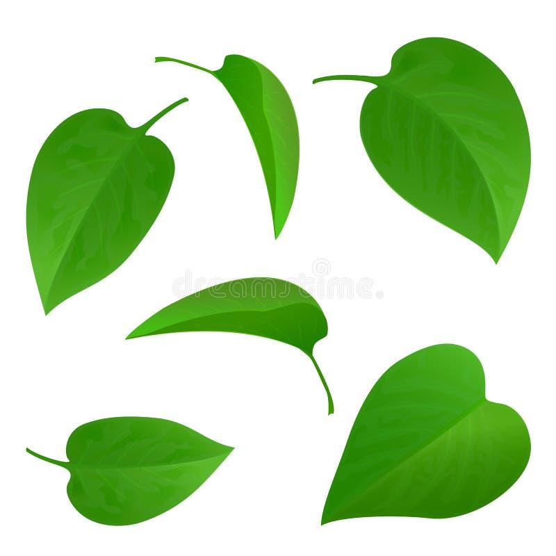 Set of green leaves. On white background, natural green leaf collection, set of green tree leaves, illustration vector illustration