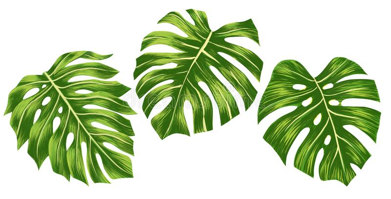Set of Green monstera tropical leaves isolated on white background, Digital illustation. Set of Green monstera tropical leaves isolated on white background stock illustration