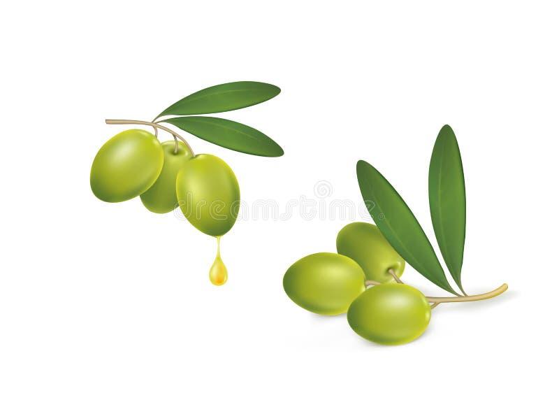 Set of green olives on white background royalty free stock photo