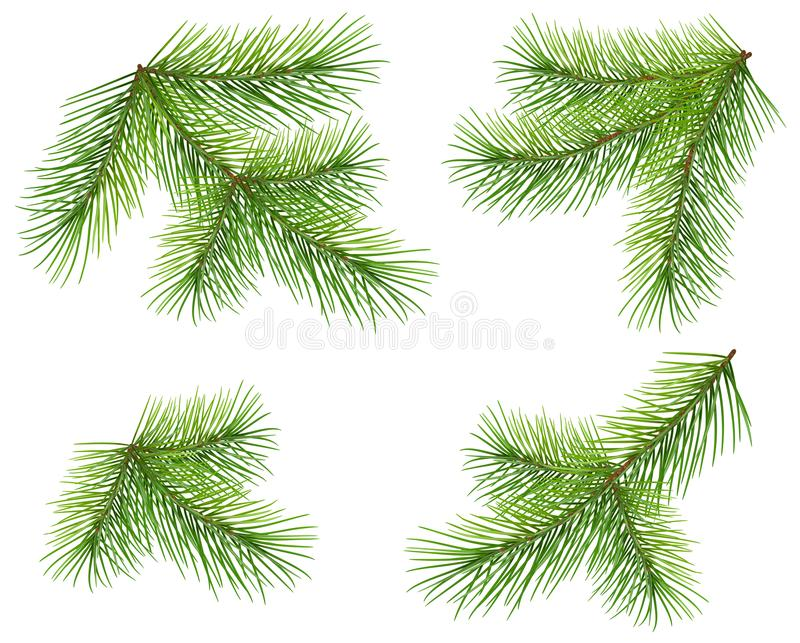 Set green pine branch isolated on white. Lush fluffy fir Christmas tree twig. Vector xmas design element illustration royalty free illustration