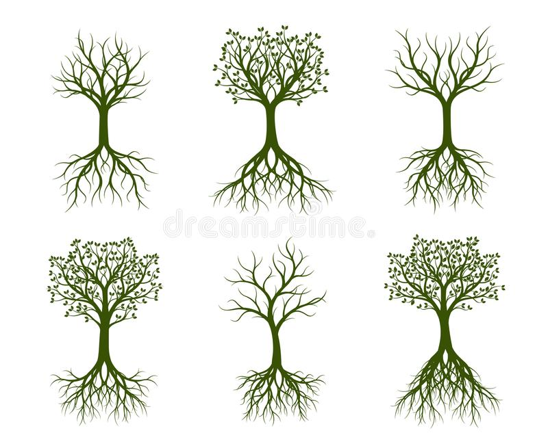 Set of green Trees with root. Vector Illustration. Set of green Trees with naked root. Vector Illustration. Plants and garden royalty free illustration