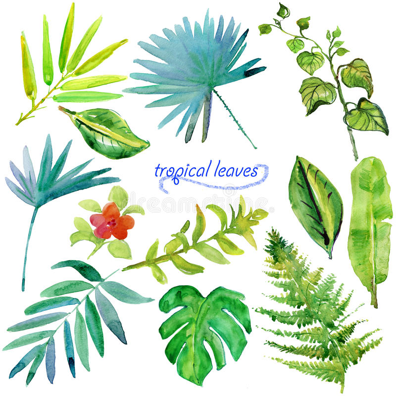 Set of green tropical watercolor leaves and plants. royalty free illustration