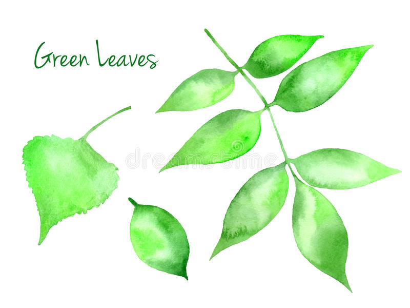 Set of green vector abstract watercolor leaves vector illustration
