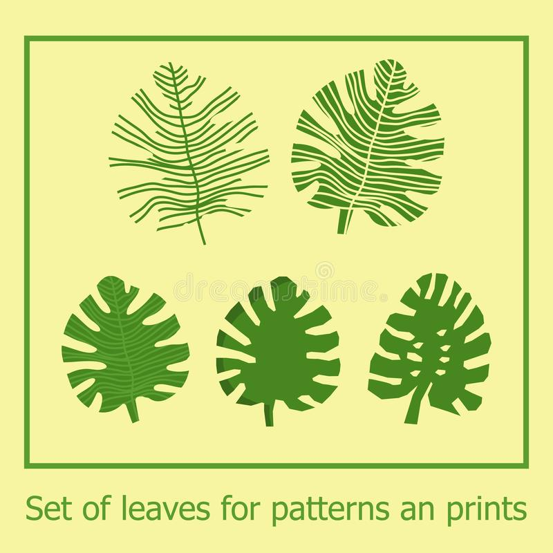 Set of green vector monstera leaves. Tropical exotic leaves for patterns, designs, templates. vector illustration