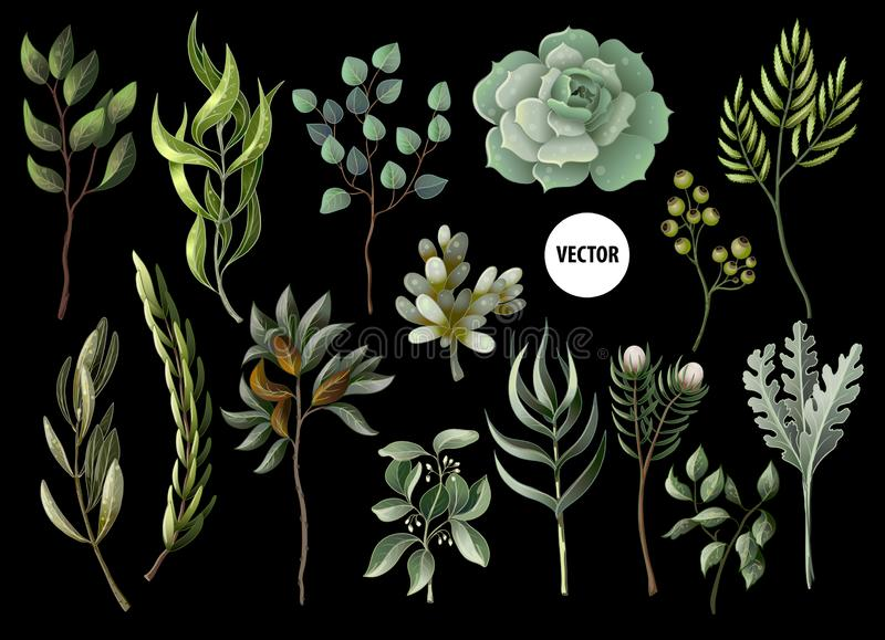 Set of greenery leaves herb and succulent in watercolor style. Eucalyptus, magnolia, fern and other vector illustration. Set of greenery leaves herb and vector illustration