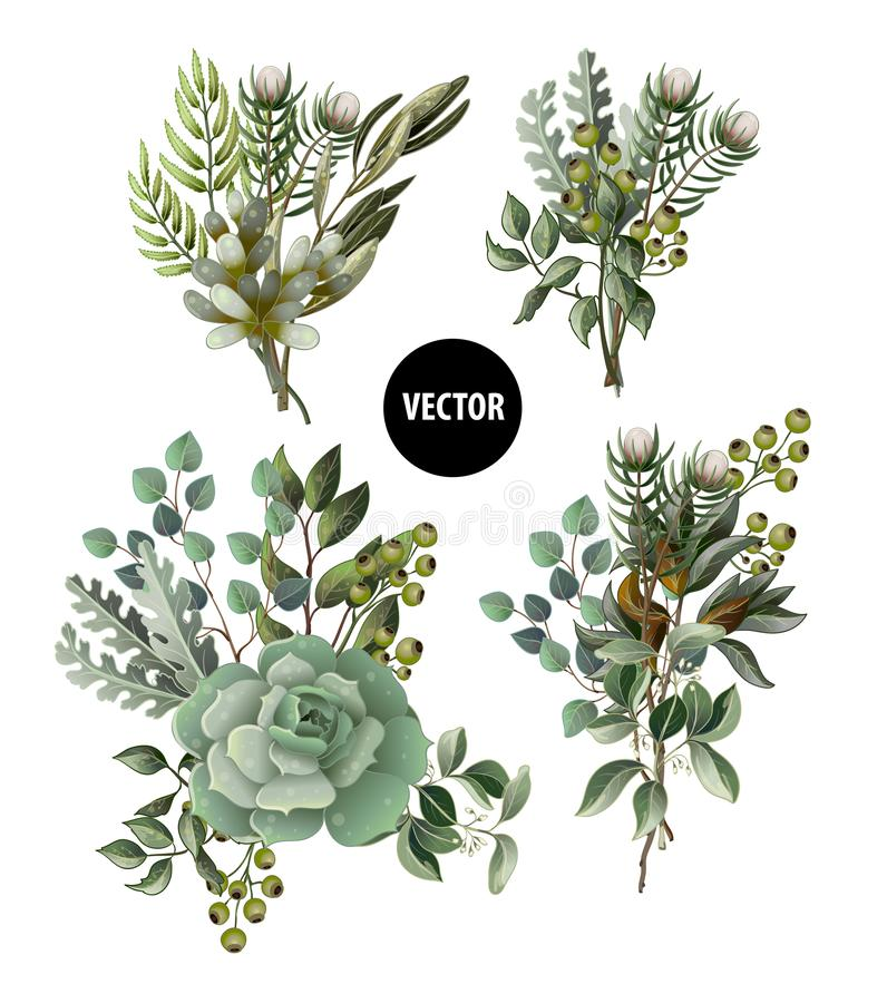 Set of greenery leaves and succulent bouquet in watercolor style. Eucalyptus, magnolia, fern and other vector illustration. Set of greenery leaves and succulent vector illustration