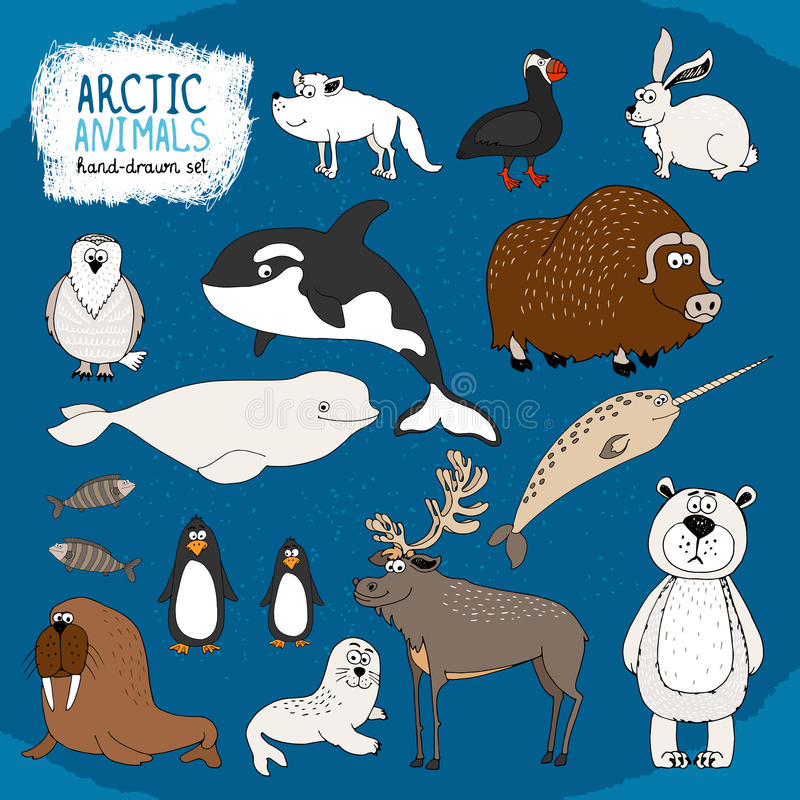 Set of hand-drawn arctic animals. On a cold blue background with a polar bear bison reindeer orca beluga whale and narwhal hare fox puffin walrus seal and vector illustration