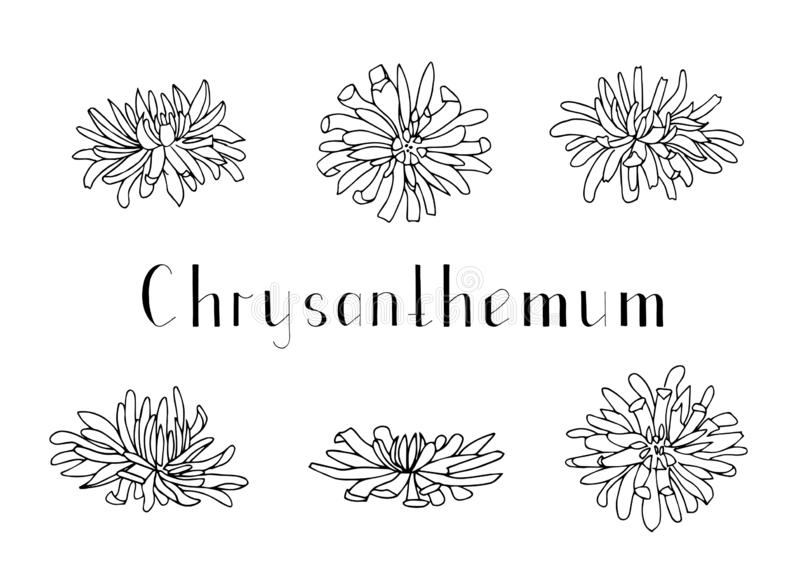 Set of hand drawn chrysanthemum flowers isolated on a white background. Lettering. Monochrome vector illustration. Black stock illustration