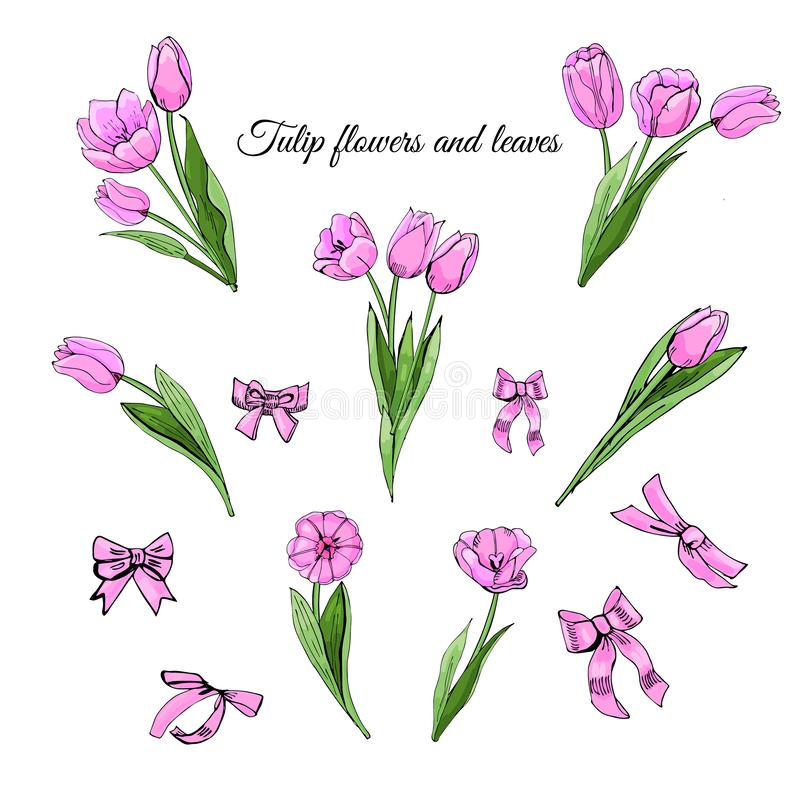 Set hand drawn colored sketch with pink tulip flowers, leaves and bows isolated on white background. royalty free illustration