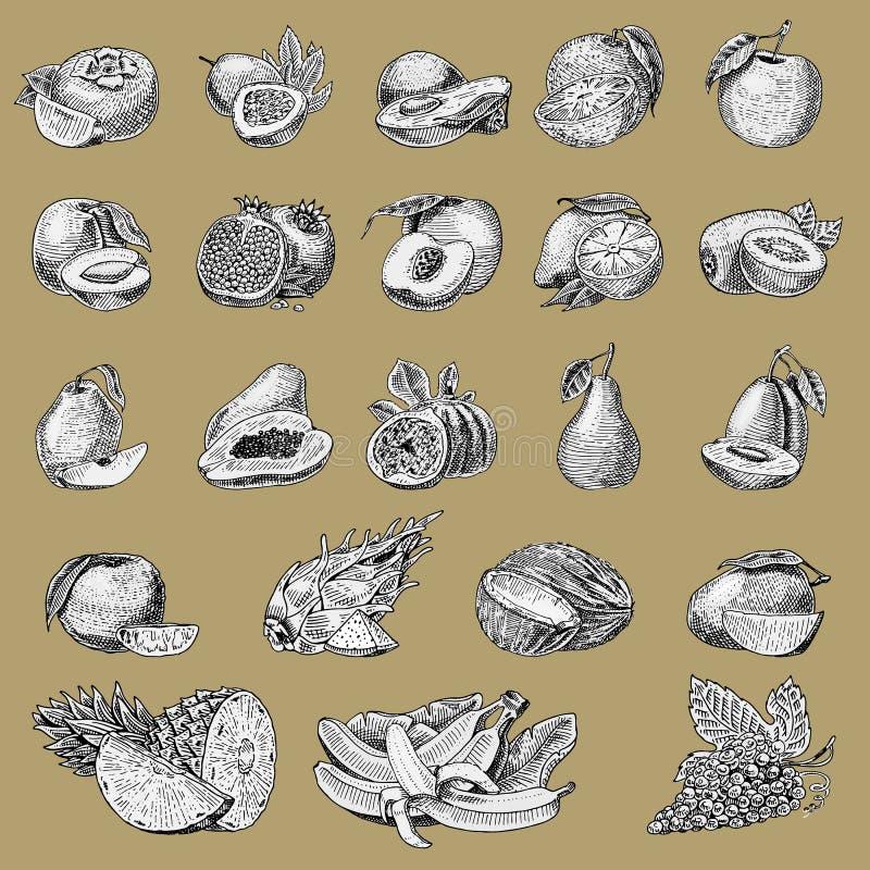 Set of hand drawn, engraved fresh fruits, vegetarian food, plants, vintage orange and apple, grape with coconut. Gragonfruit, pear, peach, plum stock illustration