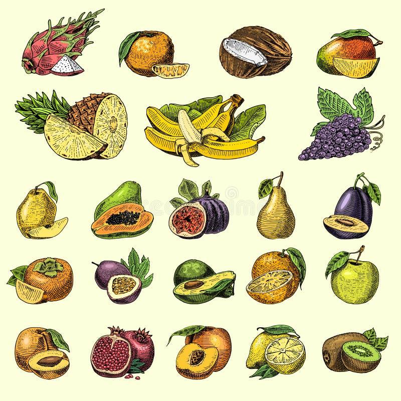Set of hand drawn, engraved fresh fruits, vegetarian food, plants, vintage orange and apple, grape with coconut. Gragonfruit, pear, peach, plum vector illustration