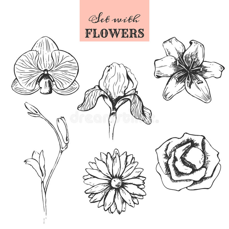 Set with hand drawn flowers stock image