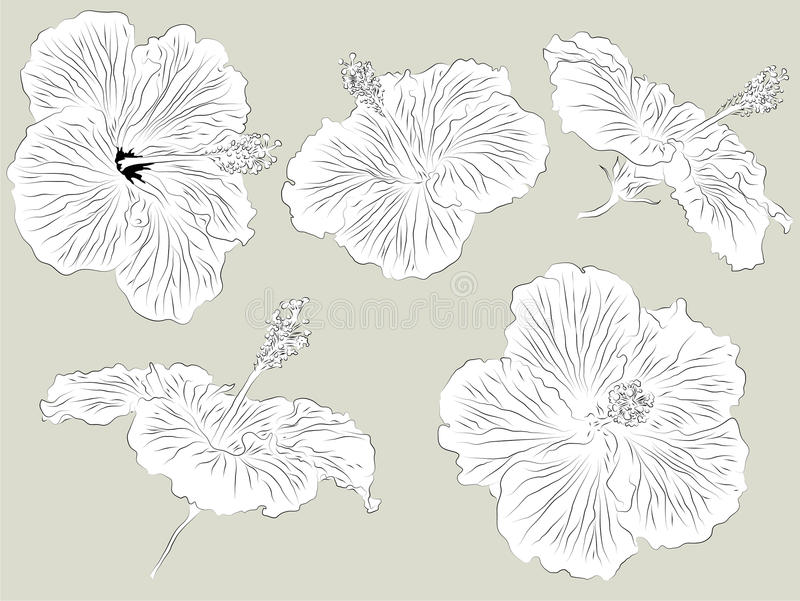 Download Set Of Hand Drawn Hibiscus Flowers Royalty Free Stock Photo - Image: 19401855