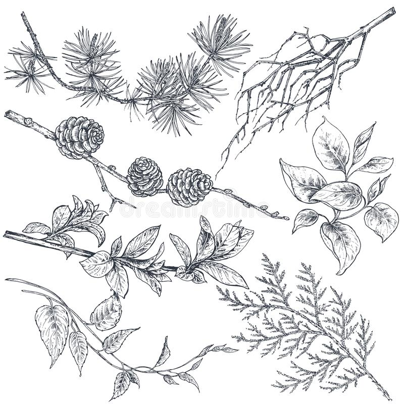 Set of hand drawn ink sketch spring branches. Plants with leaves and flowers isolated on white background. Beautiful vector collection royalty free illustration