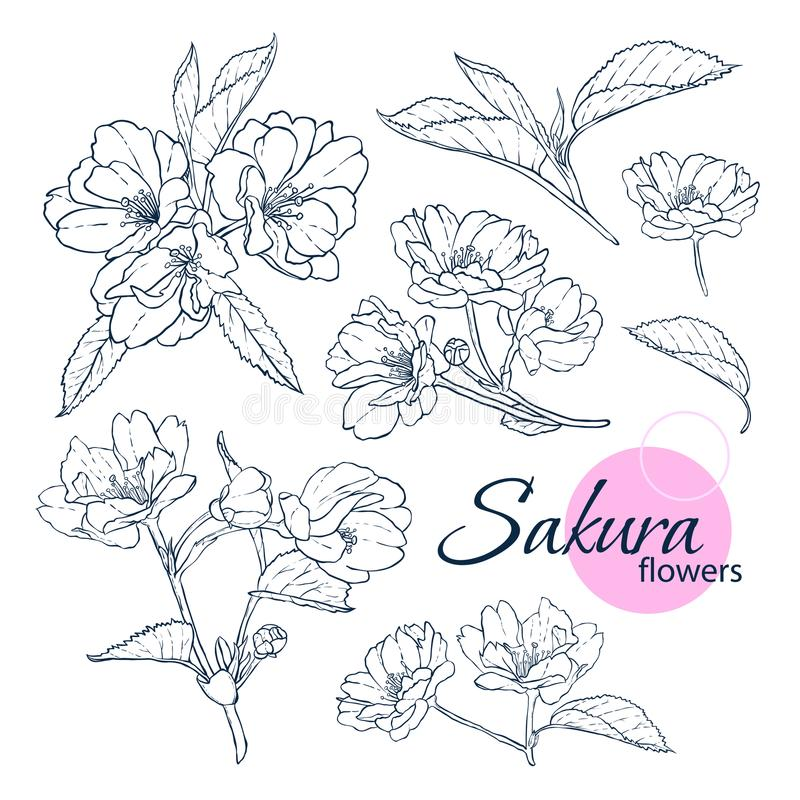 Set of hand drawn Japanese blossom sakura flowers. Line-art style illustration. Coloring book for adult and children. stock photo