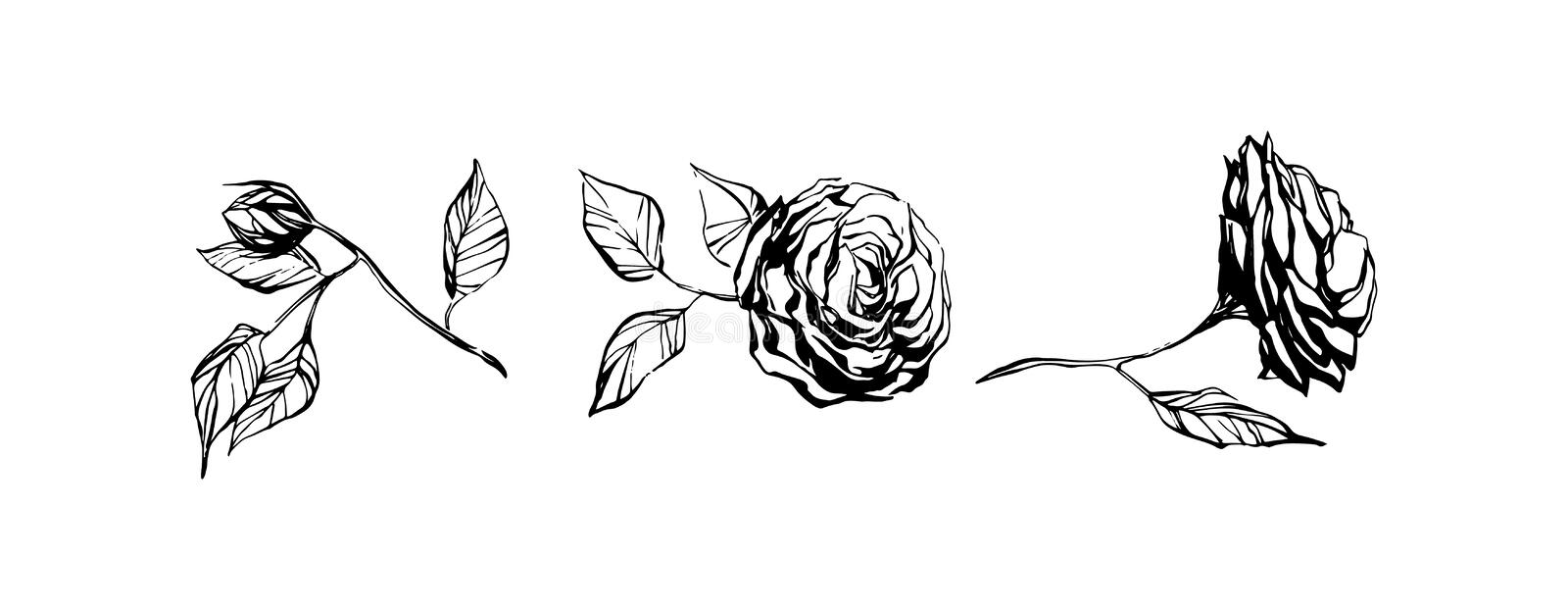 Set of hand drawn rose flowers. Plant painting by ink. Sketch botanical vector illustration. Black isolated dog-rose on white. Set of hand drawn rose flowers stock illustration