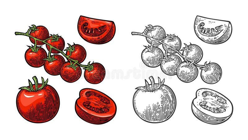 Set of hand drawn tomatoes. Branch, whole and slice. Set of hand drawn tomatoes isolated white background. Branch, whole, half and slice. Vector engraving color stock illustration