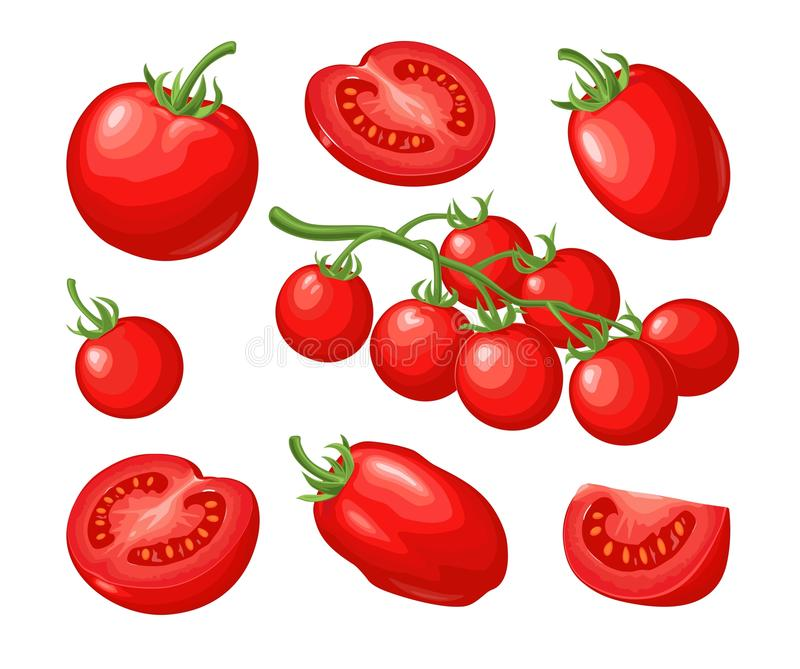 Set of hand drawn tomatoes. Branch, whole and slice. Set of hand drawn tomatoes isolated on white background. Branch, whole, half and slice. Vector flat color stock illustration