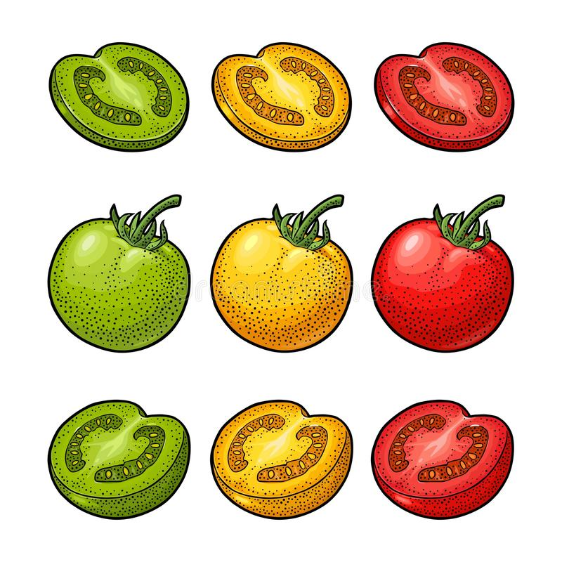 Set of hand drawn tomatoes. Branch, whole and slice. Set of hand drawn tomatoes isolated on white background. Branch, whole, half and slice. Engraving vintage vector illustration