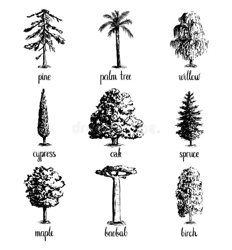 Set of hand drawn tree sketches. royalty free illustration