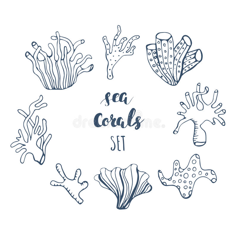 Set Of Hand Drawn Underwater Coral Reef Elements Vector Design For Your Sea Life Illustration