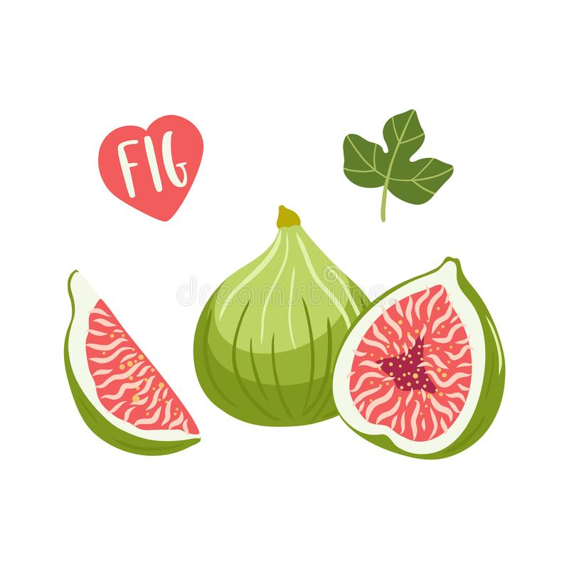 Set of hand drawn vector illustration Figs Fruits. royalty free illustration